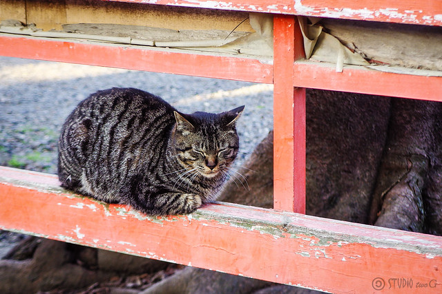 Today's Cat@2015-03-28