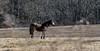 Horses Gazing-January 28, 2015-0005.jpg (albertjackson5750) Tags: goldenhorse beautifulhorse goldhorseinthemountains