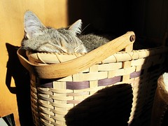 Skye in a basket (prairiegirrl) Tags: cat basket sunny