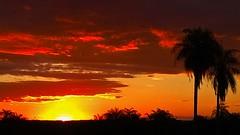 Pr-do-sol no Pantanal (1) (valdircodinhoto) Tags: sunset naturaleza sol rio del do natureza bonito prdosol jardim da ms puesta ocaso mato sul pantanal tarde grosso prata entardecer maro 2015 mvel dispositivo matogrossense