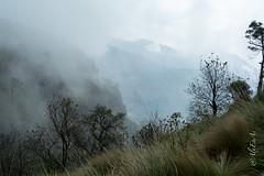 Volcan Pico de Orizaba (AlxEnAs) Tags: mexico nikon viajando bosque veracruz ontheroad volcan picodeorizaba d5200