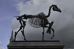 Haacke Horse 4 SDIM1500 (StefanSzczelkun) Tags: horse skeleton political trafalgarsquare publicart haacke fourthplinth