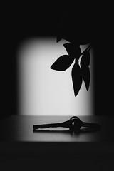 Valmiina lähtöön (nikojyrl) Tags: bw window dark key pimeä kasvi ikkuna avain synkkä