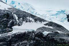 _DSC1064-2 (Roy Prasad) Tags: leica travel vacation mountain snow ice expedition rock island penguin volcano lava gentoo sony antarctica prasad cuverville a7ii cuvervilleisland s006 a7r royprasad a7m2 typ006