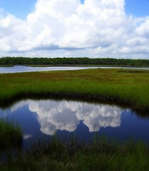 ~2008 Enchanting Florida #13~ (endemanf) Tags: nature clouds reflections outdoors skies reflexions musictomyeyes awesomeshot withsky flickrhearts heartawardsgroup diamondhearts naturalflorida yourphotowinsaheart eastcoastflorida peaceawards thisimageismusictomyeyes fotosconestilo skyascanvas naturespotofgold wowoftheday worldwidetravelogue universeofnature breathtakingpictures thisisreallyagreatphoto
