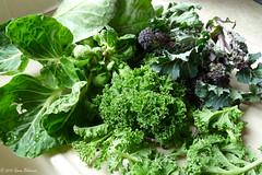 April 3rd, 2015 Brassicas for lunch (karenblakeman) Tags: uk food vegetables garden april brusselsprouts caversham 2015 curlykale brassicas purplesproutingbroccoli cavershamgarden 2015pad cabbagespringgreens