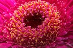 Flower Donut