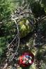 DSC_0541-1 (Chaumurky) Tags: easter folkart eastereggs easteregg paintedeggs pisianki