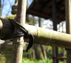 Bamboo (pienw) Tags: fence japanese bamboo hague hff japansetuin gardenclingendaelthe