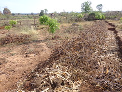 Learning to mulch with agricultural waste