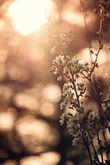 Another day fades away (Little Salty Dog) Tags: flowers sunset wisconsin evening spring plumtree blooming plumblossoms