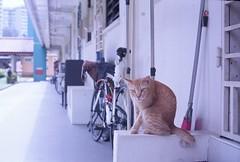 Its spot (ah.b ack) Tags: film cat 50mm singapore superia voigtlander rangefinder 400 fujifilm f2 xtra ultron prominent