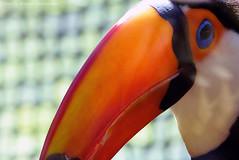 P1010409 (LaBonVampire) Tags: toucan birds animals nature leica leicalenses lumix