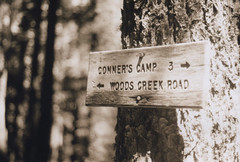 Trail sign 10, Marys Peak 2016 (Sara J. Lynch) Tags: sara j lynch trail sign marys peak conners camp woods creek road siuslaw national forest oregon coast range asahi pentax k1000 35mm film
