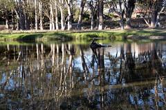 San Simeon Creek (Joe Josephs: 2,861,655 views - thank you) Tags: california travel pacificocean westcoast californiacoast fineartphotography californiacentralcoast pacificcoasthighway californiabeaches travelphotography californialandscape fineartprints joejosephs joejosephsphotography