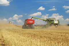 "Wheat ""All Tracks"" Harvest 2016 