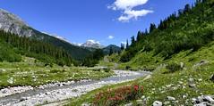 Lechweg 1 (Rolfmundi) Tags: sterreich fluss lech blumen alpenrosen steine pfad brcke bume wolken