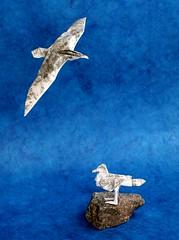 Origami Seagull (MrViolinPeter) Tags: origami mrviolinpeter peter stein wetfolding seagull mwe paperfolding papierfalten