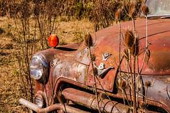Retired Dodge Truck (Farm_Boy) Tags: truck dodge old rust oregon usa pasture