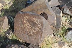 Khavtsagait - Petroglyphs (plutogno) Tags: mongolia gobi desert deer petroglyph rock carving
