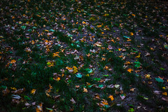 Fallen Leaves (Evan's Life Through The Lens) Tags: camera sony a7s lens glass 50mm f18 vibrant blue green orange dark gloomy clouds weather sky garden trees home light beautiful bright nature fall autumn