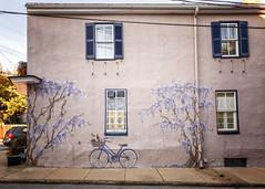 Annapolis Mural (Karol A Olson) Tags: annapolis maryland historic downtown bicycle mural windows chezamisbedandbreakfast
