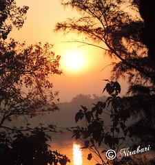 Sunrise (NIRA BANERJEE) Tags: morning sun india black nature leaves sunrise river landscape golden asia ray branches rays kolkata