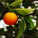 63/365 Orange