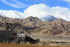 spituk monastery, ladakh (thupstan_rin) Tags: winter mountain snow monastery himalaya ladakh indusriver tibetanbuddhism littletibet indusvalley incredibleindia spitukmonastery thelastshangrila thelastparadise