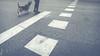 Fuera de los cuadros (camquiad) Tags: madrid street calle perro pasocebra gopro