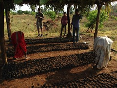 2500 trees started in the nursery