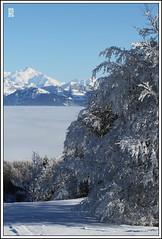 Le Mont-Blanc vu du Salve (denisbecaudphotos) Tags: winter alps alpes neige montblanc