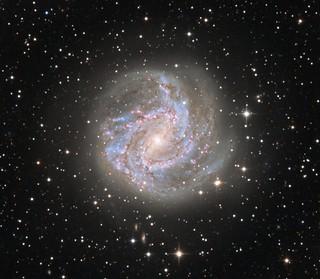 Quickie M83