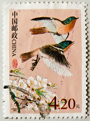 great stamp China 4.2Y (Phoenicurus alaschanicus, Alaschan-Rotschwanz, Rdstjerter, Rozsdafark, , Kzlkuyruk, , Rdstjrtslktet) People's Republic of China PRC timbre Chine postage  selo sello China francobolli Cina  (thx for sending stamps :) stampolina) Tags: china 2 bird birds animal animals postes tiere asia asien stamps stamp porto ave phoenicurus vgel timbre postage franco chine vogel pjaro selo uccello bolli ptak sello briefmarken markas pulu   frimrker timbreposte francobolli bollo pullar timbresposte  znaczki frimaerke    postapulu yupio postetimbre  blyegek postacreti postestimbres phoenicurusalaschanicus 2alaschanrotschwanzrotschwanzrdstjerterrozsdafarkkzlkuyrukrdstjrtslktetoiseauel