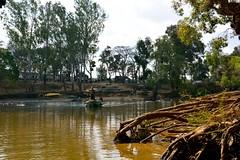 DSC_0137_2 (drs.sarajevo) Tags: india karnataka madikeri kaveririver dubareelephantpark