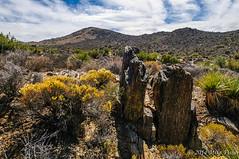 Field of a Geologist's Dreams (BFS Man) Tags: california d300 jackisretirement joshuatree nationalpark nikon roadtrip rock sky