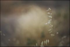 esto (joaaglera) Tags: summer gold golden nikon solitude dof bokeh tranquility desenfoque verano soledad nikkor dorado tranquilidad d610 105mmf2ddc