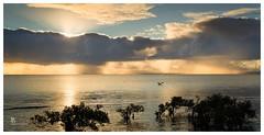 Morning light at the sea (pbaddz) Tags: water clouds sunrise dawn australia pelican queensland moretonbay wellingtonpoint