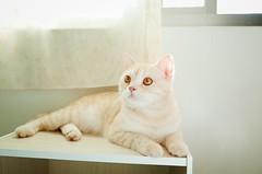 #cat # # # #mypet #pet # #meow #catlife # # # #lovecats ##chat #GR #petsagram (chatcat0715) Tags: pet cat meow gr   mypet lovecats    catlife petsagram