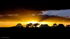 DSC_0165 (timmie_winch) Tags: nikon nikond3000 d3000 august august2016 2016 sun sunset sunsetsuffolk sunsetoversuffolkcountryside sunsetovercornfields sunsetovercornfield silhouette 18105mm 18105vr nikon18105mmvrlens shadows golden goldenhour goldenlight elliedunn ellie eleanordunn ells eleanor ellsdunn dunn landscape landscapephotography landscapephotographer naturephotographer naturephotography nature timwinchphotography tim timwinch winch debenham ip14 suffolk