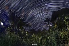 Al sur larga exposicin (Santiago Angel (Diseo y Fotografia)) Tags: colombia risaralda pereira laflorida noche lavialactea astrofotografia astrophotography angelfotografia canon naturaleza nubes estrellas stars astrourbana negro montaas arbol exposicionlarga