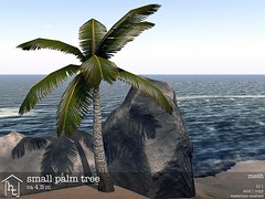 [ht:home] small palm tree (Corvus Szpiegel) Tags: life park summer vacation holiday plant tree green beach home garden this polynesia small palm sl secondlife hate second tropic organic ht genre islanders