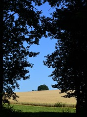 2016, July 20. - 31 degrees Celsius. (:Linda:) Tags: tree germany village grain bluesky thuringia archway brden
