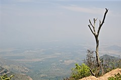 Mind Your Step (The Spirit of the World) Tags: india tree nature landscape highlands view kerala hills deadtree vista munnar valleys southernindia