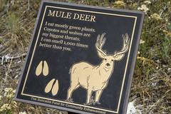Mule Deer Placard - Suncadia (Don Thoreby) Tags: cascades washingtonstate placards cascademountains cascaderange naturesigns thousandstepstaircase