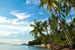 TALING NGAM     Koh Samui, Thailand (ernesto teruya) Tags: kohsamui thailand nature tree palmtree