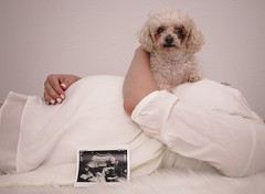 Big Sister Mitsey (victoria.barnett) Tags: pregnancy pregnant maternity dog poodle belly bump baby girl ultrasound dress mother motherhood pet family