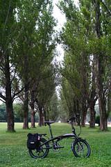 Sapporo Maeda Forest Park   (T&W.Eager) Tags: dp2 sapporo forest pottering potteringhokkaido hokkaido foveon sigma dp2m dp2merrill  merrill bicycle foldingbike ternbicycles ternverge ternbicycle