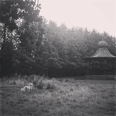 (DIE HEXEN) Tags: rutgersaluk saluki portrait dog greyhound blackandwhite monochrome gardens park memory nature perisiangreyhound trees ghost ghostdog shiroi inu spirit outdoor oldmasters