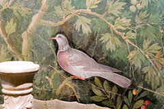 IMG_0097 (jaglazier) Tags: 1stcentury 1stcenturyad 2016 4thstyle 72316 animals birds campania copyright2016jamesaglazier crafts deciduoustrees fountains frescoes fruittrees goldfinchs grecoroman heads herms italy july landscape marble museoarcheologiconazionale museoarcheologiconazionaledinapoli naples napoli national nationalarchaeologicalmuseum nazionale painting plants pomepii religion rituals roman sparrows stonesculpture trees archaeology art figs floral flowers fresco gardens hopoee illusionism landscapes laurel magpies pigeons sculpture tromploeil wallpainting
